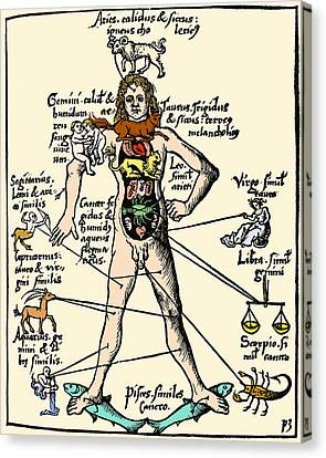 16th-century Medical Astrology Canvas Print by Cordelia Molloy