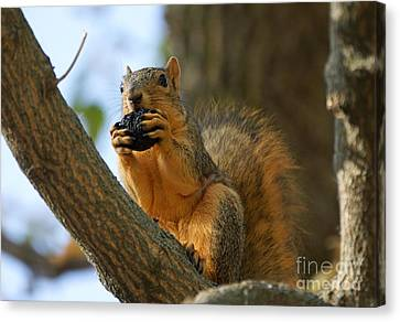 Squirrel Canvas Print by Lori Tordsen