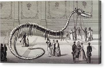1851 Hydrarchos Whale Fake Monster Fossil Canvas Print by Paul D Stewart