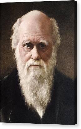 Collier Canvas Print - 1881 Charles Darwin Face Portrait by Paul D Stewart