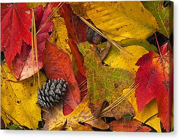 Autumn Colors Canvas Print by Andrew Soundarajan
