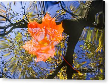 Autumn Leaf On The Water Canvas Print