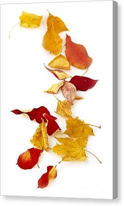 Autumn Leaves Canvas Print by Elena Elisseeva
