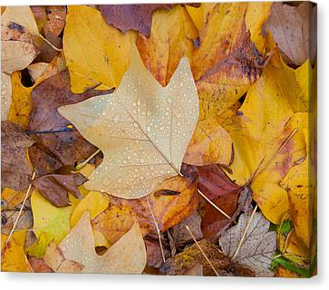 Autumn Leaves Canvas Print by Hans Engbers