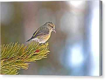 Bird Canvas Print by Elijah Weber