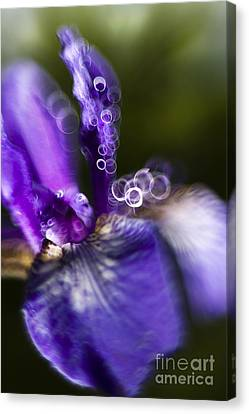 Blue Iris Canvas Print by Angel  Tarantella