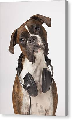 Boxer Dog With Headphones Canvas Print by LJM Photo
