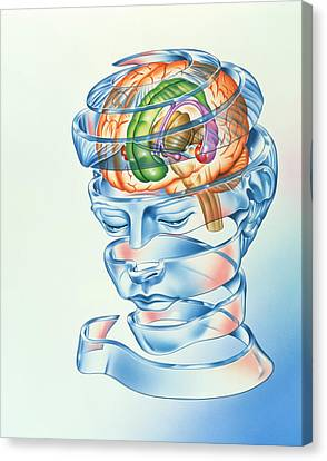 Brain Limbic System Canvas Print by John Bavosi