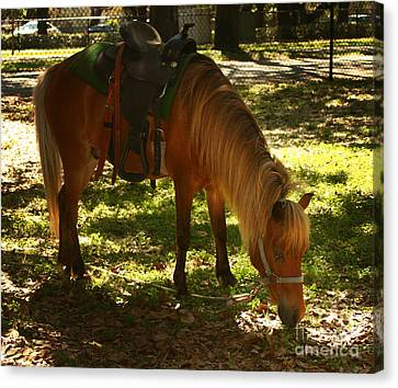 Brown Horse Canvas Print by Blink Images