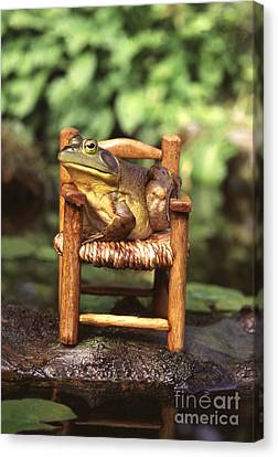 Bullfrog Canvas Print by Kenneth H Thomas and Photo Researchers