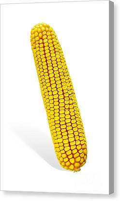 Corn Cob Canvas Print by Carlos Caetano