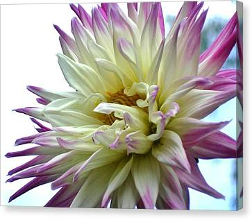 Canvas Print featuring the photograph Dahlia by Katy Mei