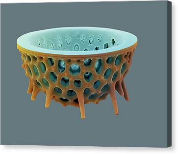 Diatom, Sem Canvas Print by David Mccarthy