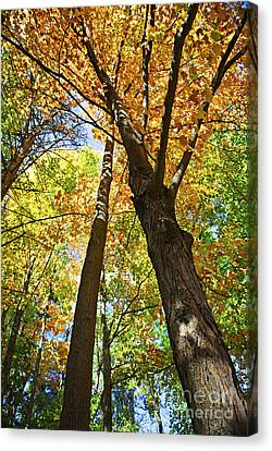 Maple Season Canvas Print - Fall Forest by Elena Elisseeva