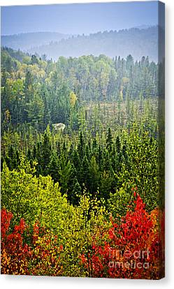 Maple Season Canvas Print - Fall Forest Rain Storm by Elena Elisseeva