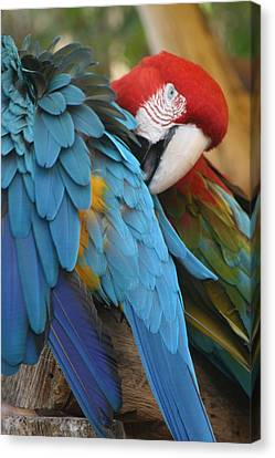 Feather By Feather Canvas Print by Valia Bradshaw