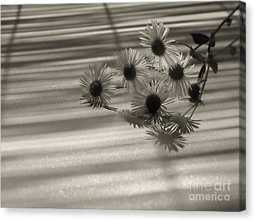 Flower  Canvas Print by Odon Czintos