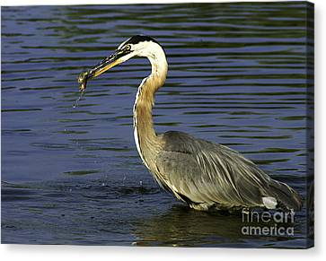 Canvas Print featuring the photograph 2 For 1 Dinner Special by Clayton Bruster