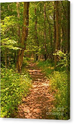Forest Trail Canvas Print by Bob and Nancy Kendrick