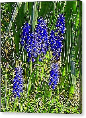 Canvas Print featuring the photograph Grape Hyacinths by Holly Martinson