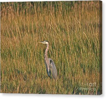 Canvas Print featuring the photograph Great Blue Heron by Cindy Lee Longhini