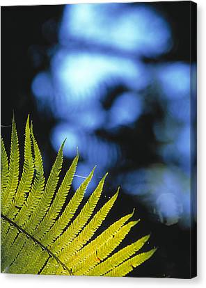 Hapu'u Fern Canvas Print by G. Brad Lewis