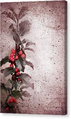 Holly Branch  Canvas Print by Carlos Caetano