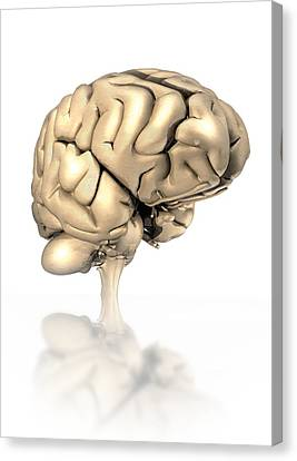 Human Brain, Artwork Canvas Print by Victor Habbick Visions