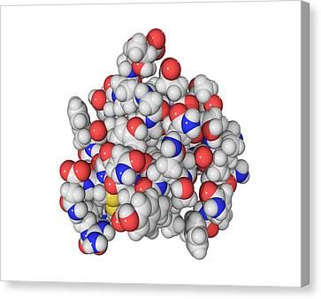 Insulin Molecule Canvas Print by Laguna Design