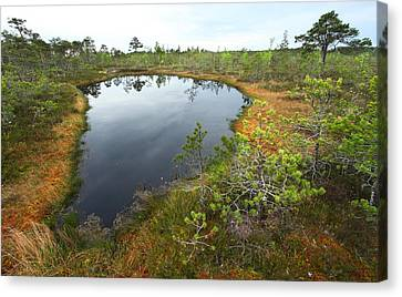 Lake In The Swamp Canvas Print by Igors Parhomciks