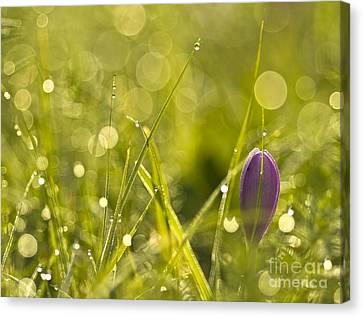 Light Flowers Canvas Print by Odon Czintos