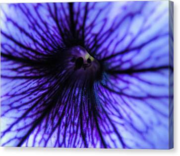 Canvas Print featuring the photograph Look Within by Tiffany Erdman