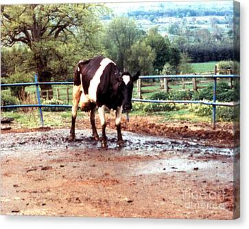 Mad Cow Disease Canvas Print by Science Source