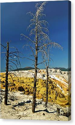 Mammoth Upper Terrace Canvas Print by Greg Norrell