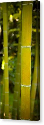 Mystical Bamboo Canvas Print by Sebastian Musial
