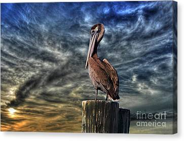 Canvas Print featuring the photograph Pelican At Sunset by Dan Friend