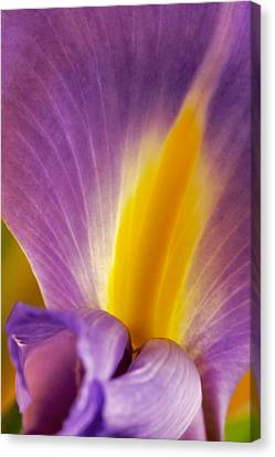 Canvas Print featuring the photograph Photograph Of A Dutch Iris by Perla Copernik
