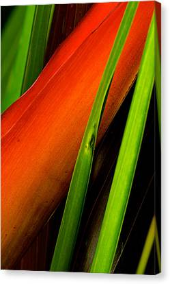 Photograph Of A Parrot Flower Heliconia Canvas Print by Perla Copernik