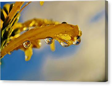 Canvas Print featuring the photograph Raindrops On Blossom by Werner Lehmann