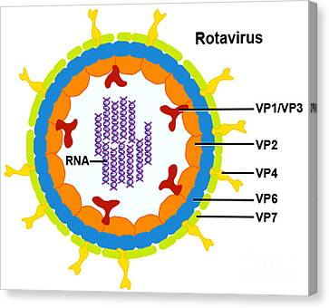 Rotavirus Canvas Print by Science Source