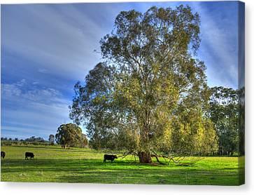 Rural Australia Canvas Print by Imagevixen Photography