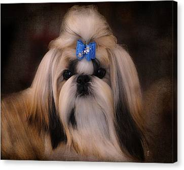 Shih Tzu Canvas Print by Jai Johnson