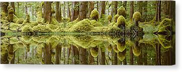 Swamp Canvas Print by David Nunuk