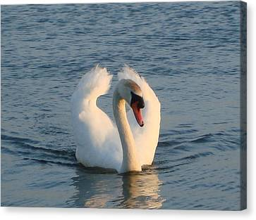 Canvas Print featuring the photograph Swan by Katy Mei
