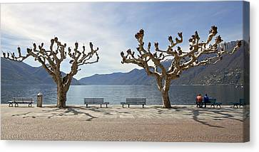 sycamore trees in Ascona - Ticino Canvas Print by Joana Kruse