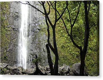 The Manoa Falls Waterfall In Honolulu Canvas Print by Stacy Gold