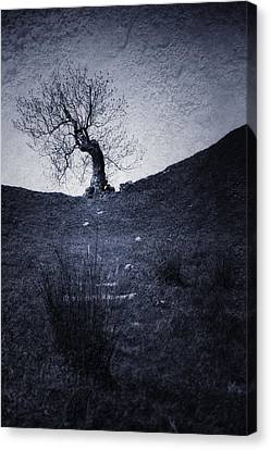 Tree Canvas Print by Svetlana Sewell