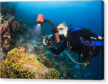 Underwater Photography Canvas Print by Dave Fleetham - Printscapes