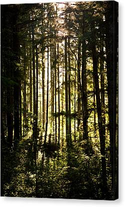 Canvas Print - Untitled by Kimberly Deverell