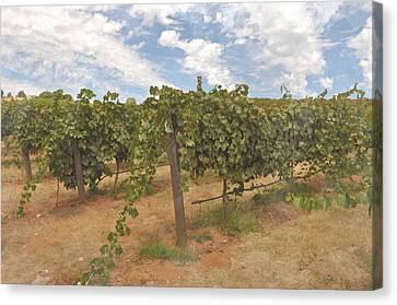 Vineyard Blue Sky Canvas Print